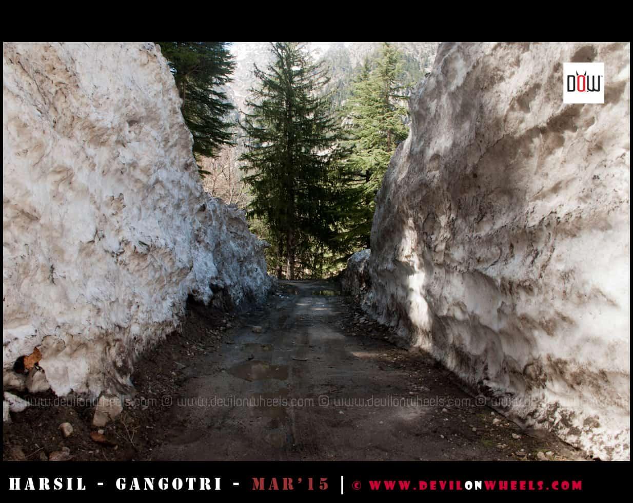 The High Snow Walls near Dharali