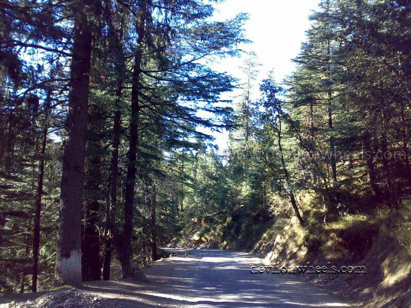 Views enroute Kufri from Chail